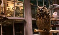 owls flutter to and fro